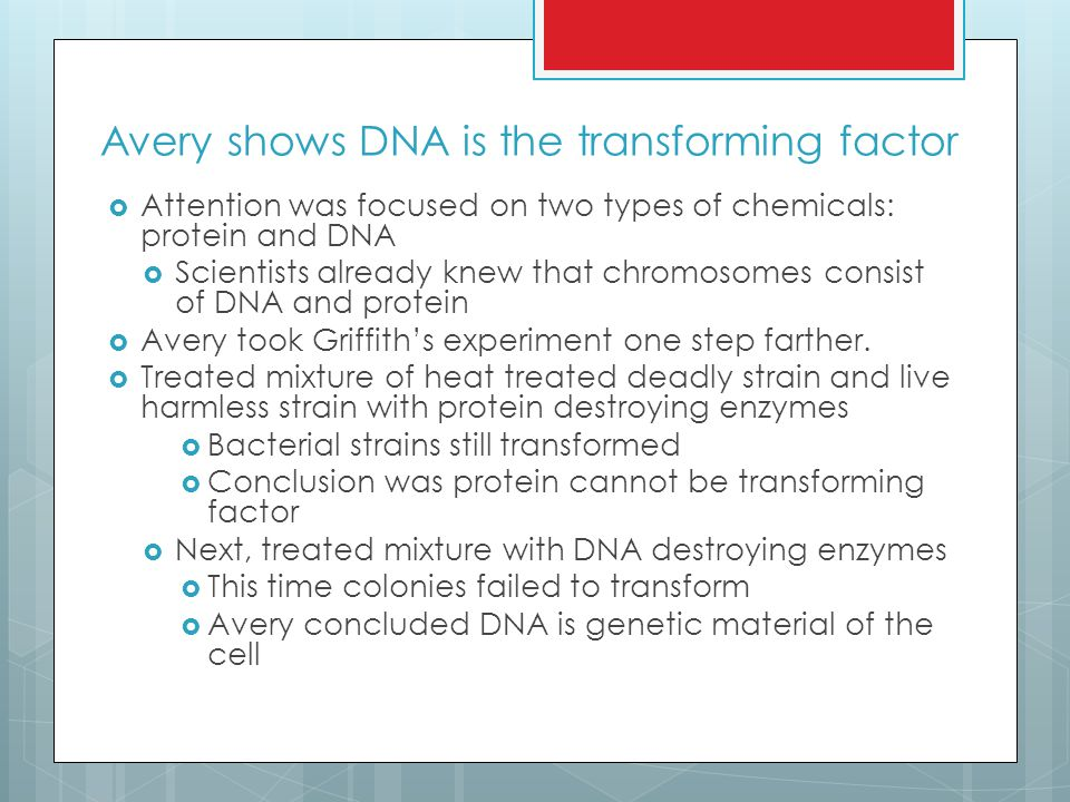 Avery shows DNA is the transforming factor  Attention was focused on two types of chemicals: protein and DNA  Scientists already knew that chromosomes consist of DNA and protein  Avery took Griffith's experiment one step farther.