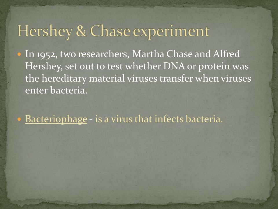 In 1952, two researchers, Martha Chase and Alfred Hershey, set out to test whether DNA or protein was the hereditary material viruses transfer when viruses enter bacteria.