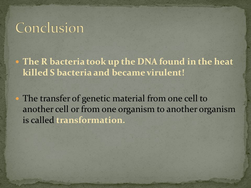 The R bacteria took up the DNA found in the heat killed S bacteria and became virulent.