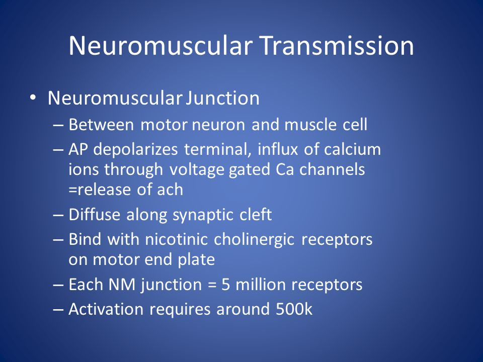 Neuromuscular Transmission Neuromuscular Junction – Between motor neuron and muscle cell – AP depolarizes terminal, influx of calcium ions through vol