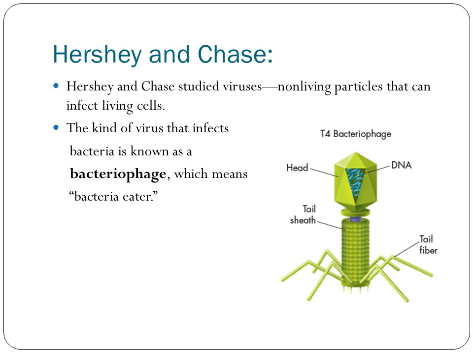 Hershey and Chase: Hershey and Chase studied viruses—nonliving particles that can infect living cells.