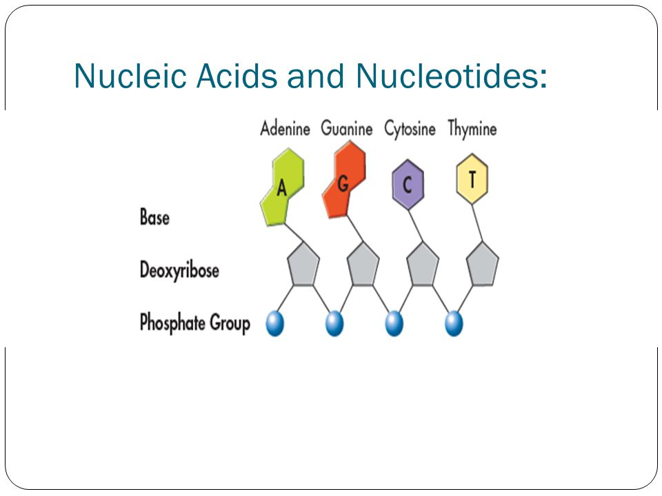 Nucleic Acids and Nucleotides: