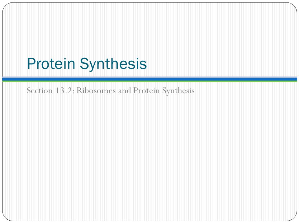 Protein Synthesis Section 13.2: Ribosomes and Protein Synthesis