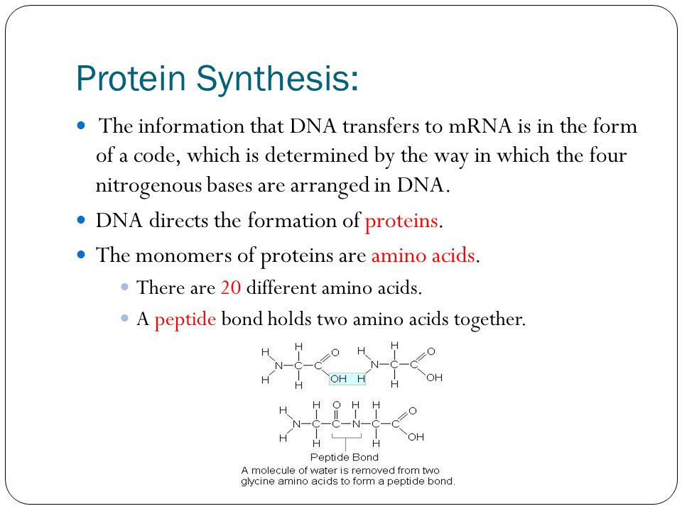 Protein Synthesis: The information that DNA transfers to mRNA is in the form of a code, which is determined by the way in which the four nitrogenous bases are arranged in DNA.
