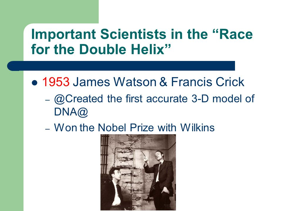 Important Scientists in the Race for the Double Helix 1953 James Watson & Francis Crick – @Created the first accurate 3-D model of DNA@ – Won the Nobel Prize with Wilkins