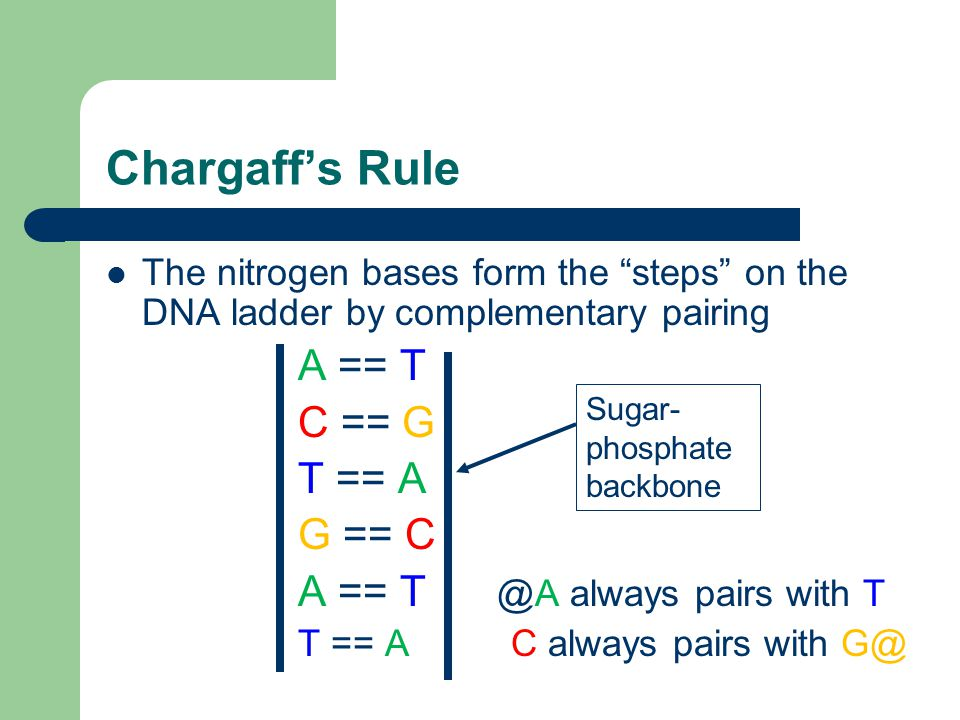 Chargaff's Rule The nitrogen bases form the steps on the DNA ladder by complementary pairing A == T C == G T == A G == C A == T @A always pairs with T T == A C always pairs with G@ Sugar- phosphate backbone