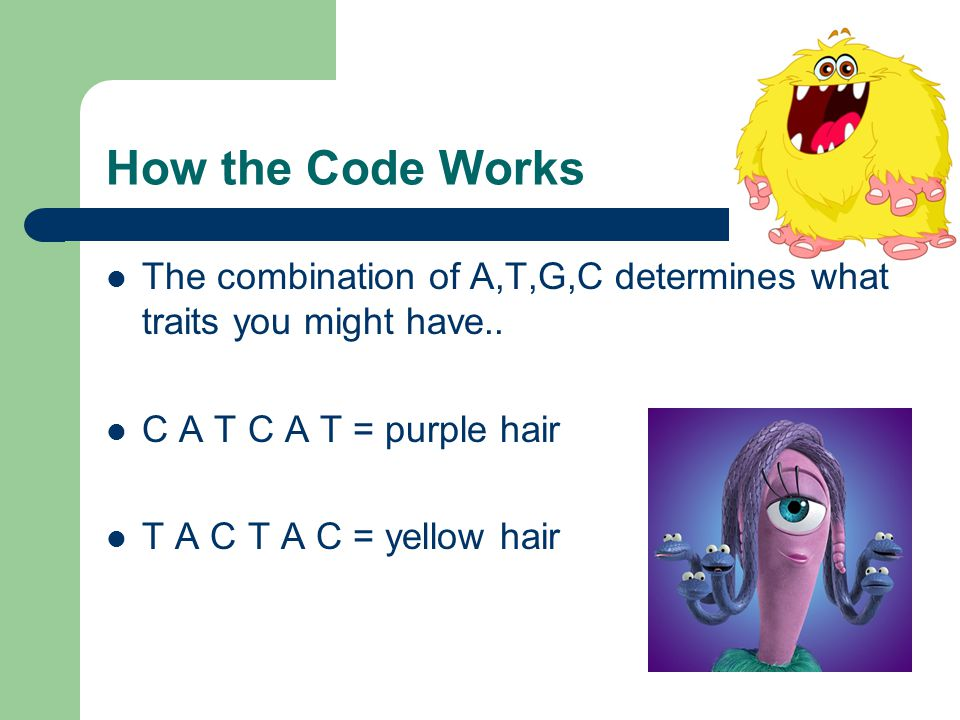 How the Code Works The combination of A,T,G,C determines what traits you might have..