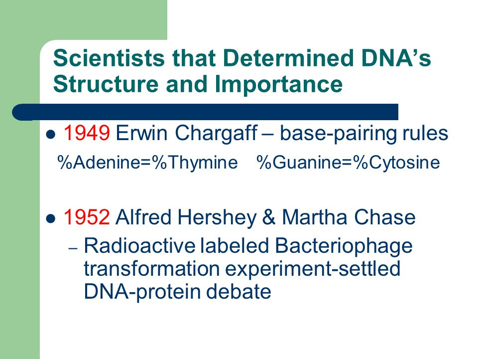 Scientists that Determined DNA's Structure and Importance 1949 Erwin Chargaff – base-pairing rules %Adenine=%Thymine %Guanine=%Cytosine 1952 Alfred Hershey & Martha Chase – Radioactive labeled Bacteriophage transformation experiment-settled DNA-protein debate