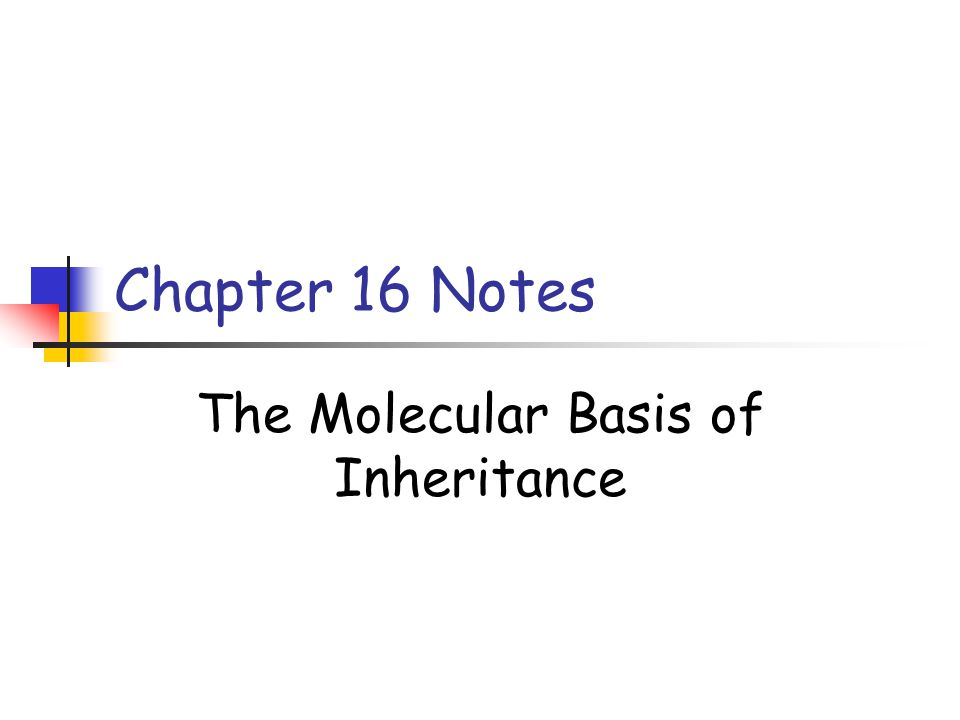 Chapter 16 Notes The Molecular Basis of Inheritance