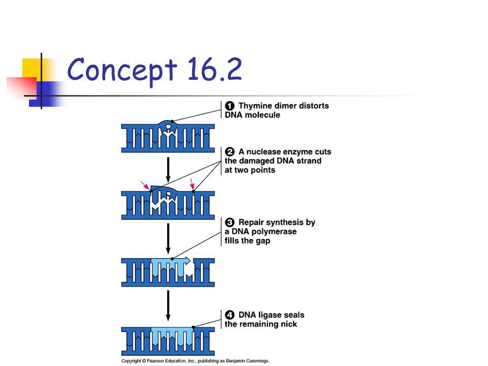 Concept 16.2