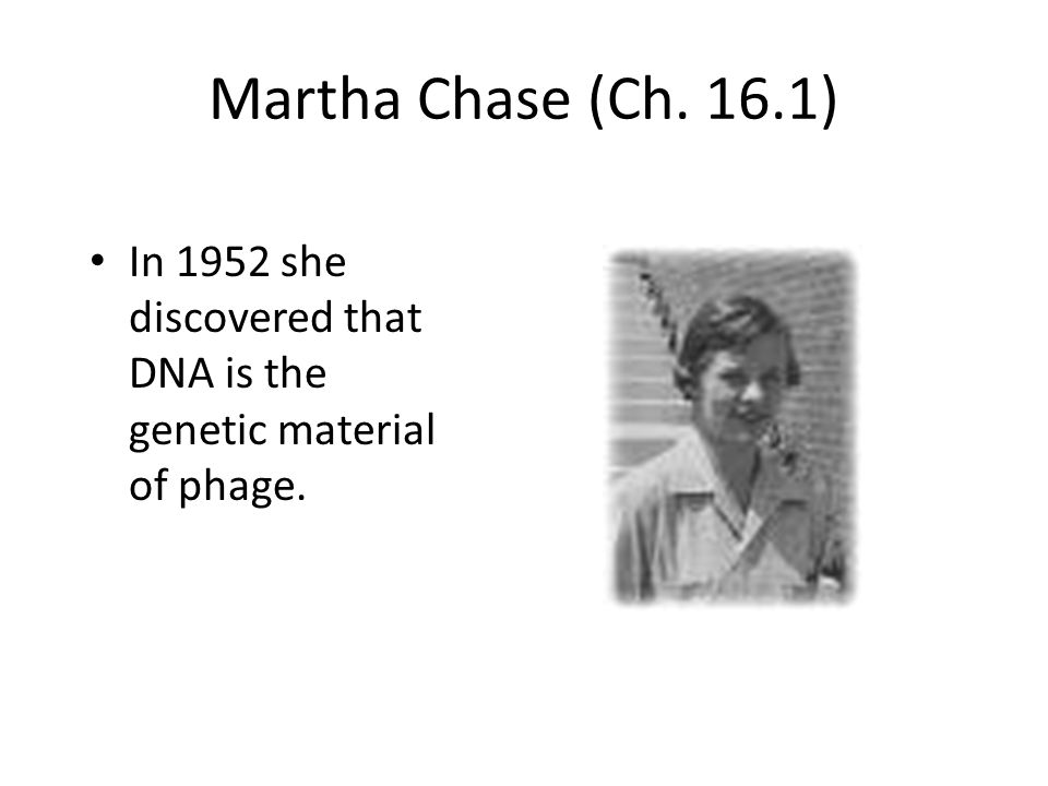 Martha Chase (Ch. 16.1) In 1952 she discovered that DNA is the genetic material of phage.