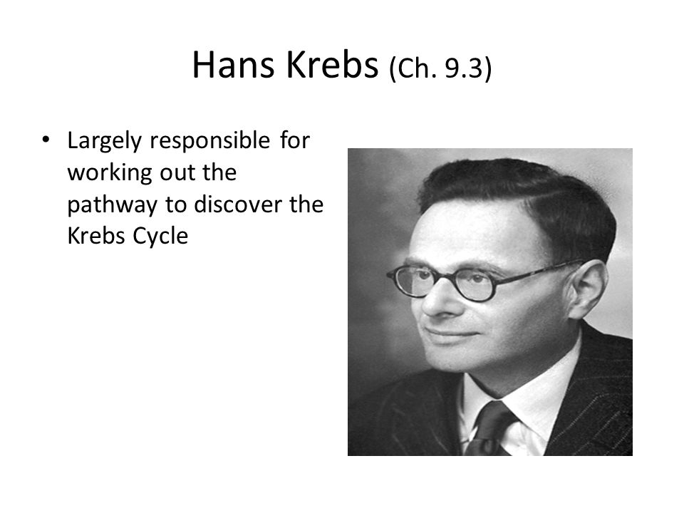 Hans Krebs (Ch. 9.3) Largely responsible for working out the pathway to discover the Krebs Cycle