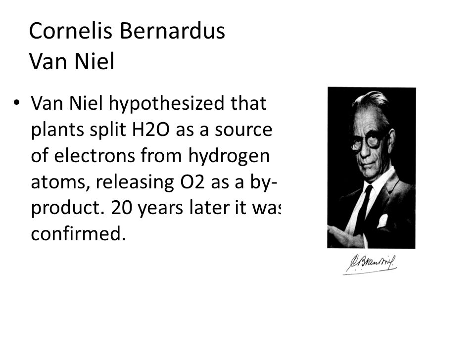 Van Niel hypothesized that plants split H2O as a source of electrons from hydrogen atoms, releasing O2 as a by- product.