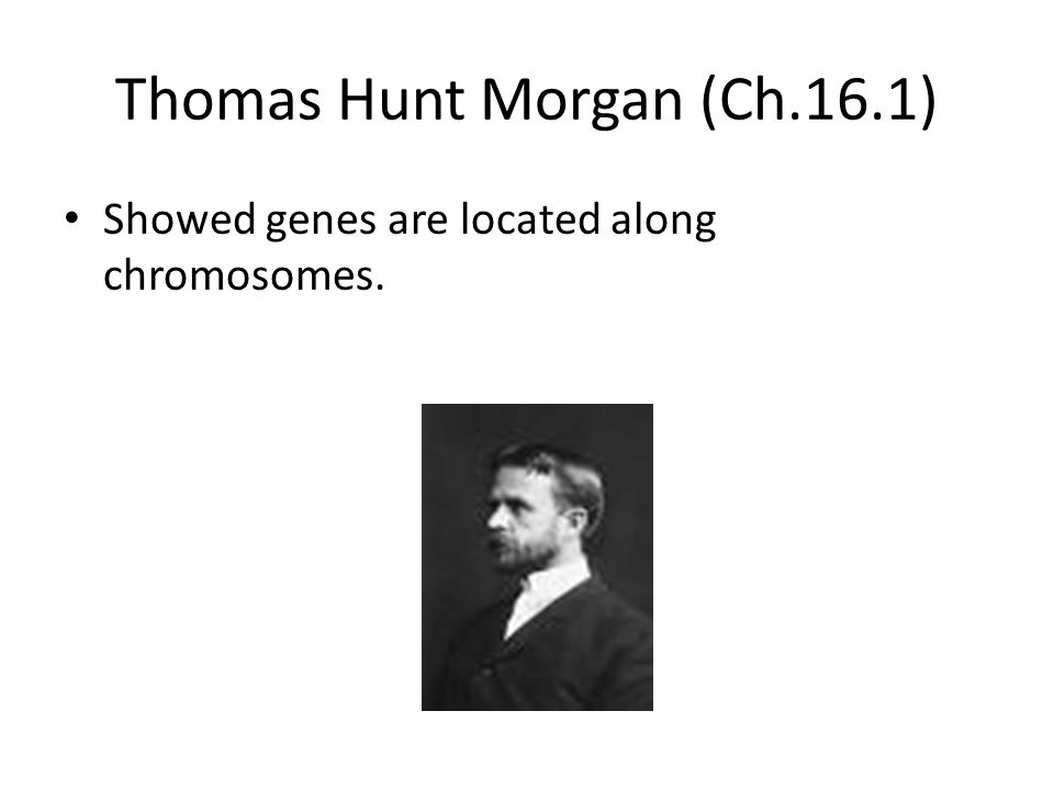 Thomas Hunt Morgan (Ch.16.1) Showed genes are located along chromosomes.