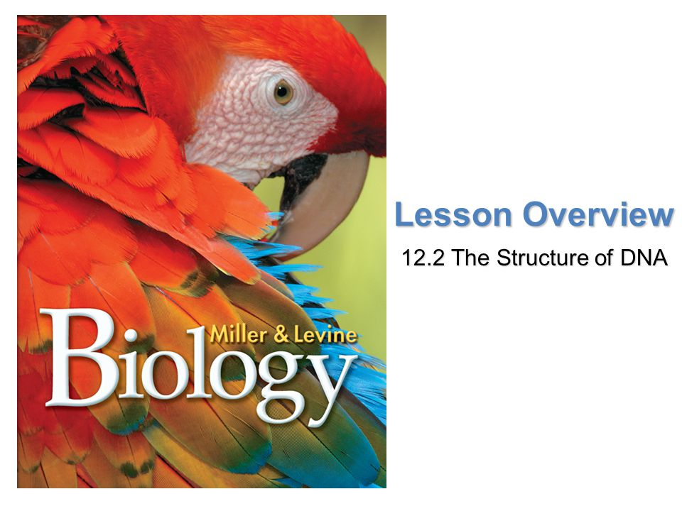 Lesson Overview 12.2 The Structure of DNA