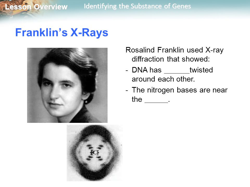 Lesson Overview Lesson Overview Identifying the Substance of Genes Franklin's X-Rays Rosalind Franklin used X-ray diffraction that showed: -DNA has tw