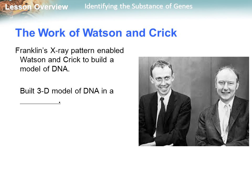 Lesson Overview Lesson Overview Identifying the Substance of Genes The Work of Watson and Crick Franklin's X-ray pattern enabled Watson and Crick to build a model of DNA.