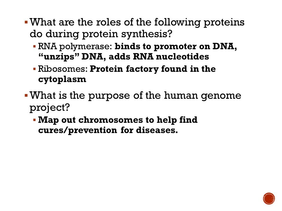  What are the roles of the following proteins do during protein synthesis.
