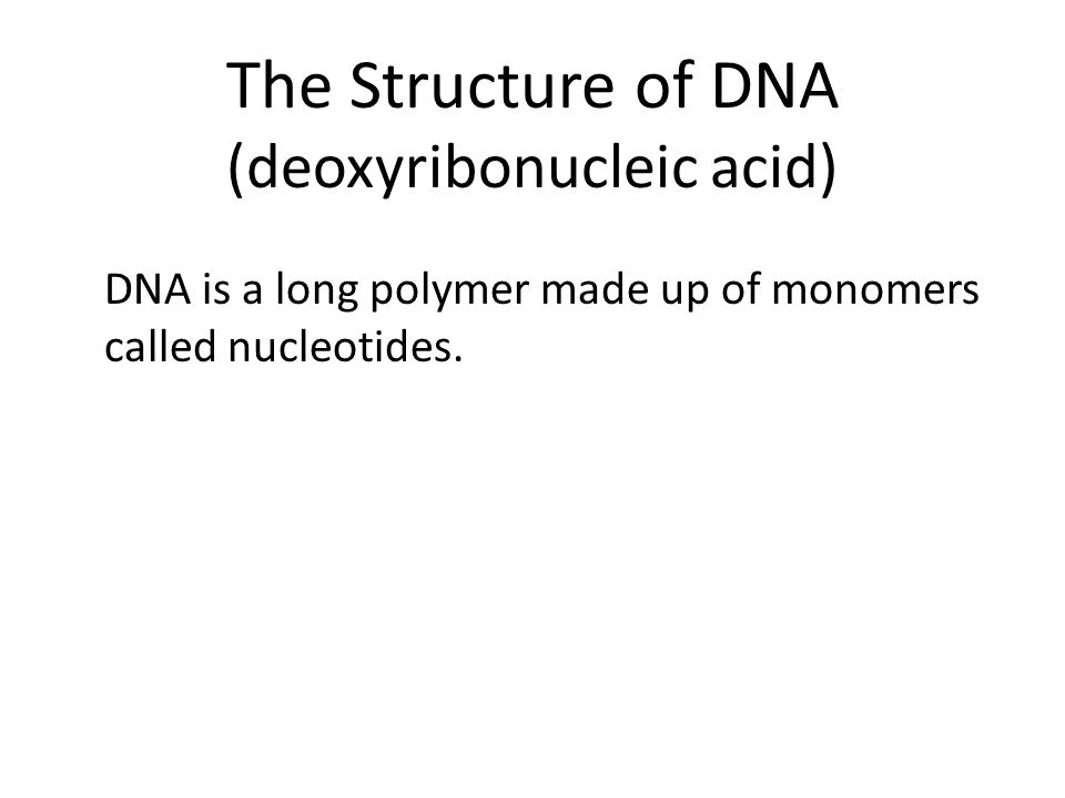 The Structure of DNA (deoxyribonucleic acid) DNA is a long polymer made up of monomers called nucleotides.
