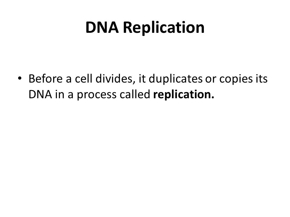 Before a cell divides, it duplicates or copies its DNA in a process called replication.