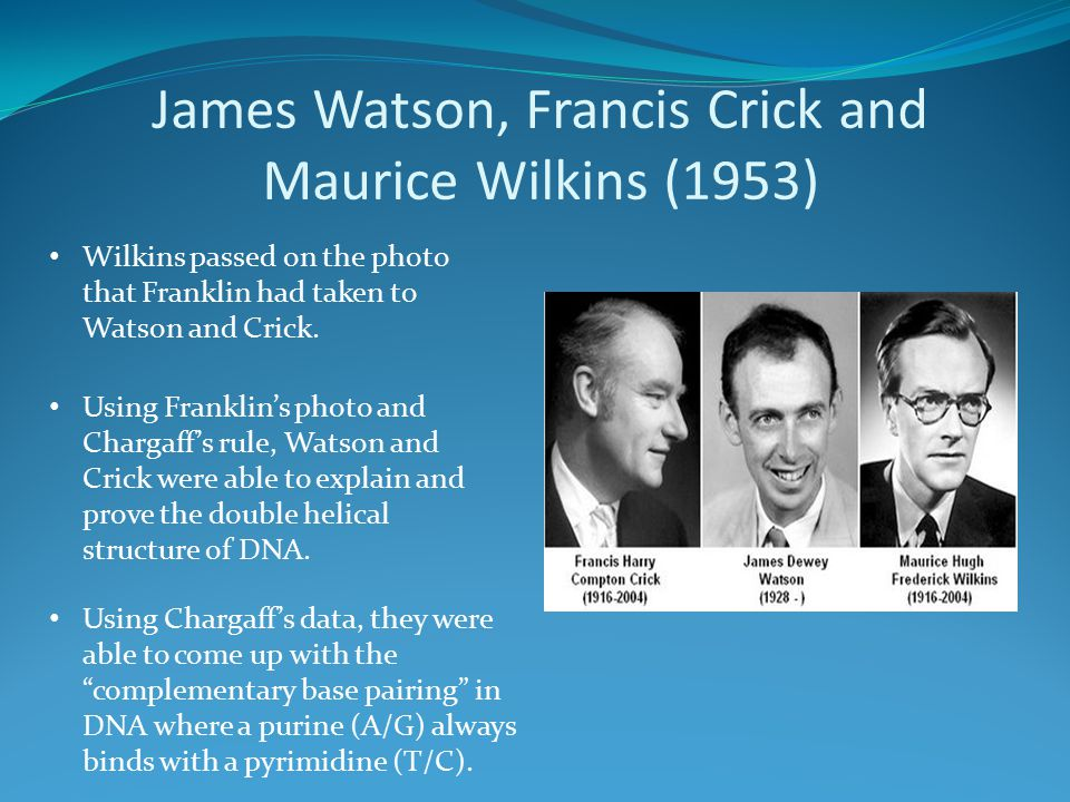 James Watson, Francis Crick and Maurice Wilkins (1953) Wilkins passed on the photo that Franklin had taken to Watson and Crick. Using Franklin's photo