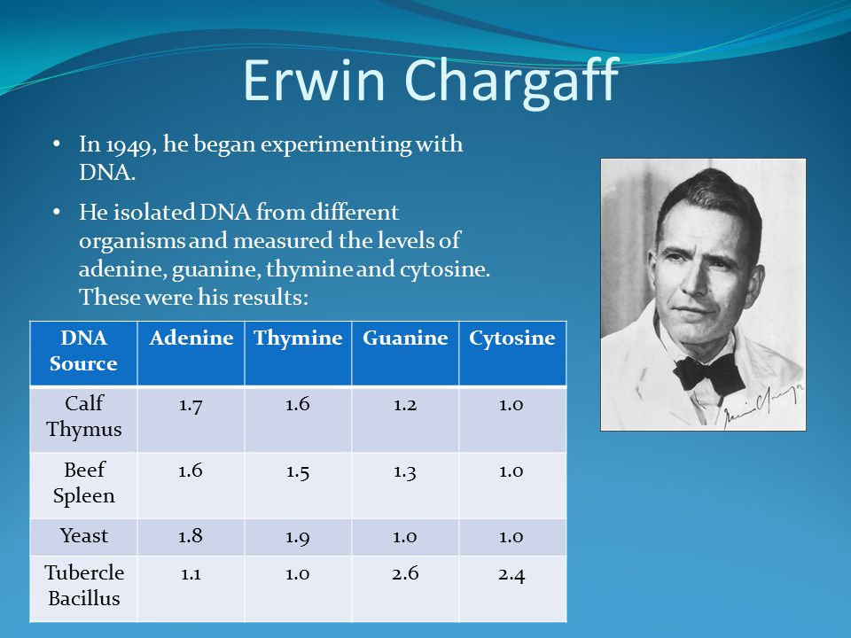 Erwin Chargaff In 1949, he began experimenting with DNA. He isolated DNA from different organisms and measured the levels of adenine, guanine, thymine