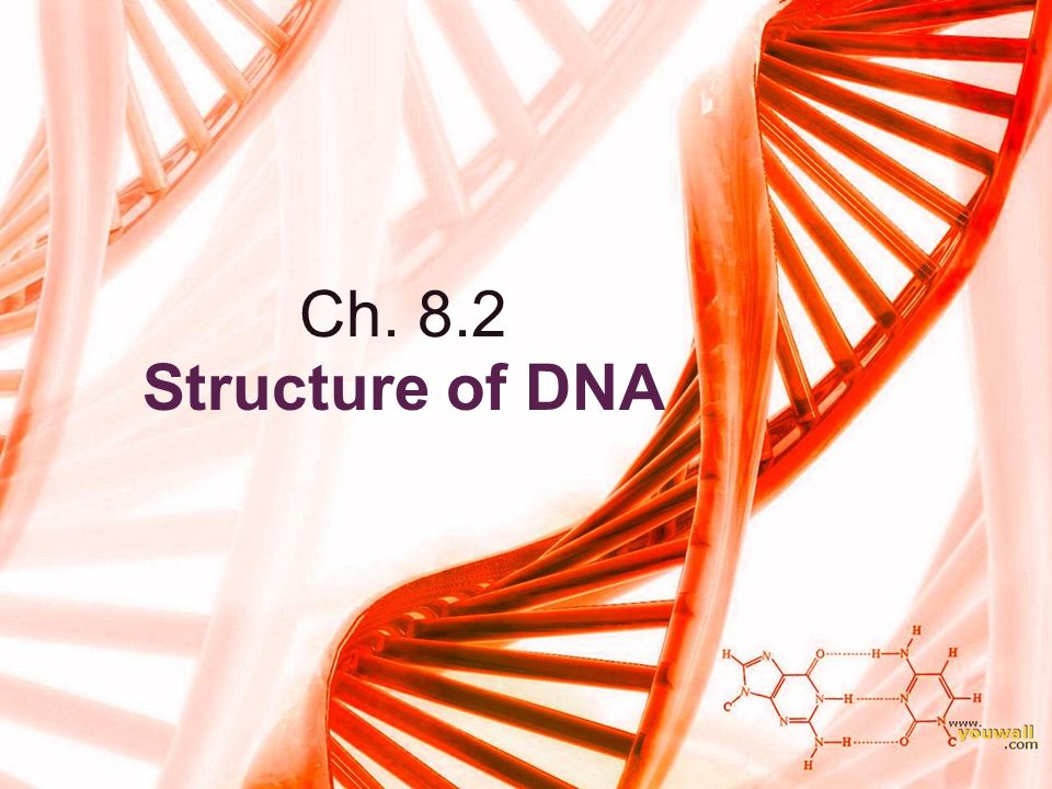 Ch. 8.2 Structure of DNA