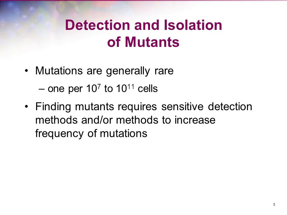Detection and Isolation of Mutants Mutations are generally rare –one per 10 7 to 10 11 cells Finding mutants requires sensitive detection methods and/