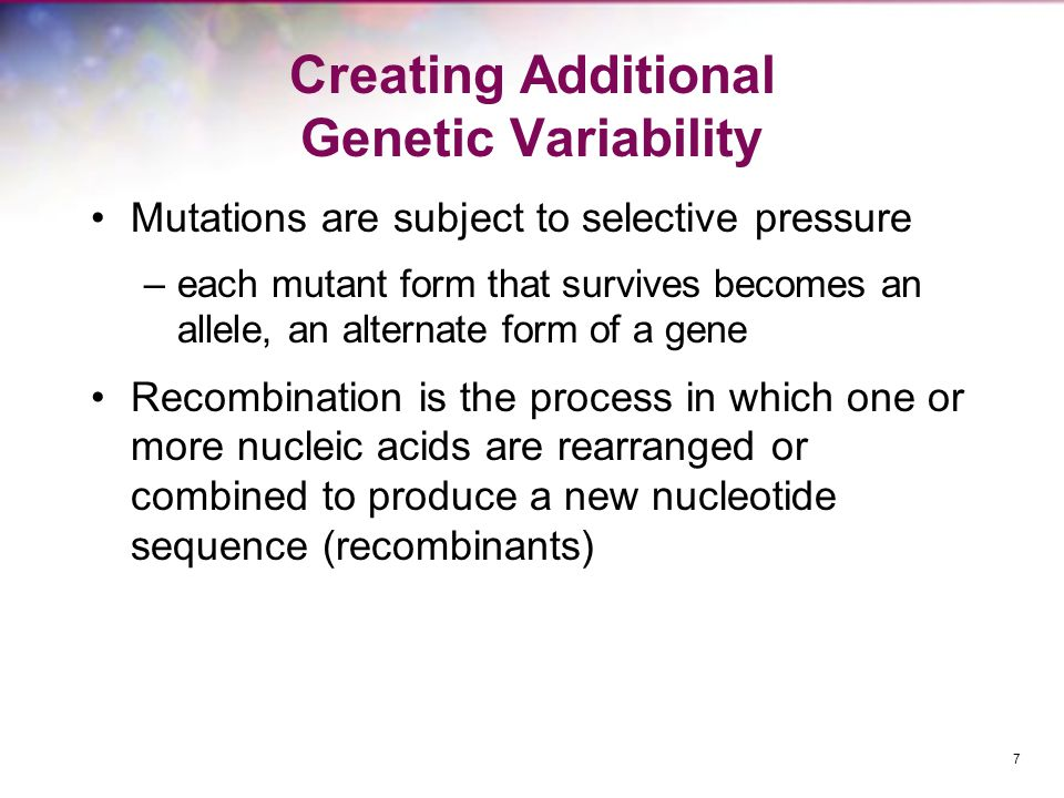 Creating Additional Genetic Variability Mutations are subject to selective pressure –each mutant form that survives becomes an allele, an alternate fo