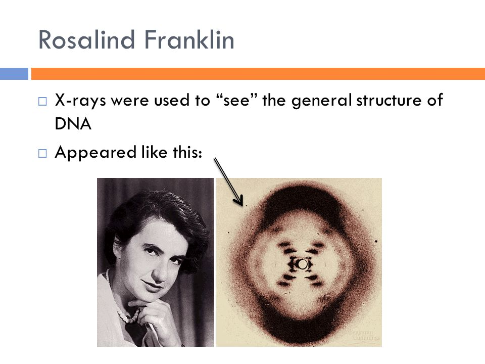 Rosalind Franklin  X-rays were used to see the general structure of DNA  Appeared like this: