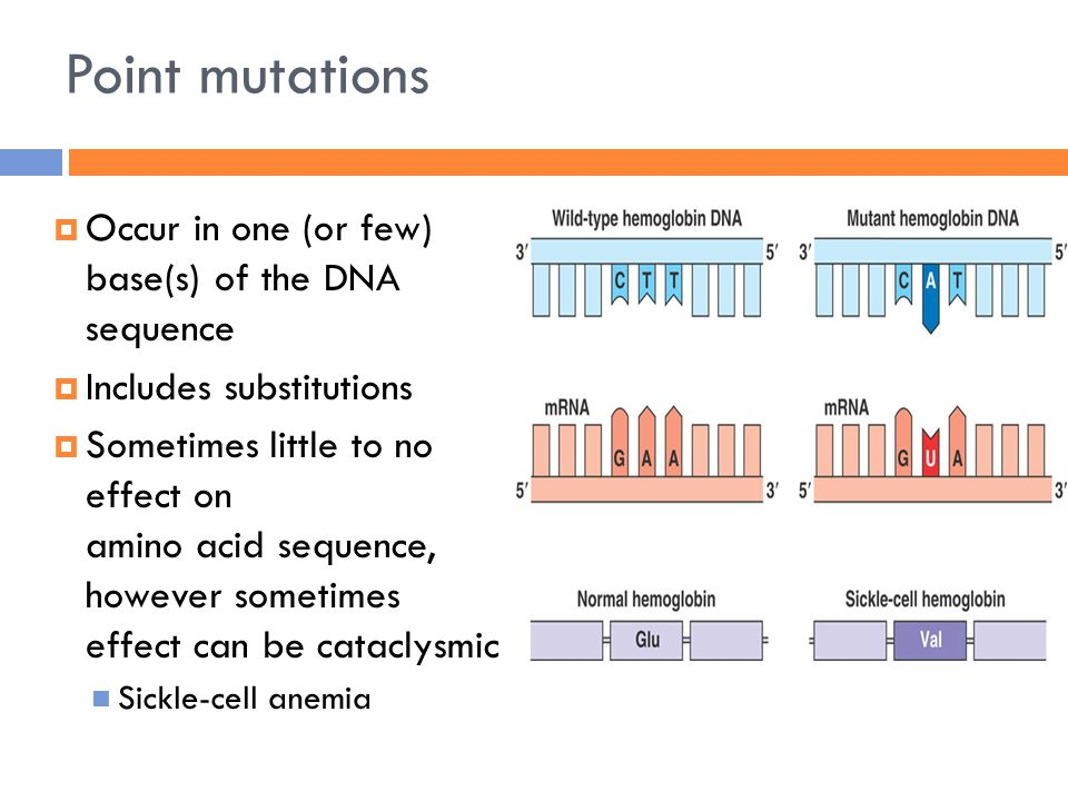 Point mutations  Occur in one (or few) base(s) of the DNA sequence  Includes substitutions  Sometimes little to no effect on amino acid sequence, however sometimes effect can be cataclysmic Sickle-cell anemia