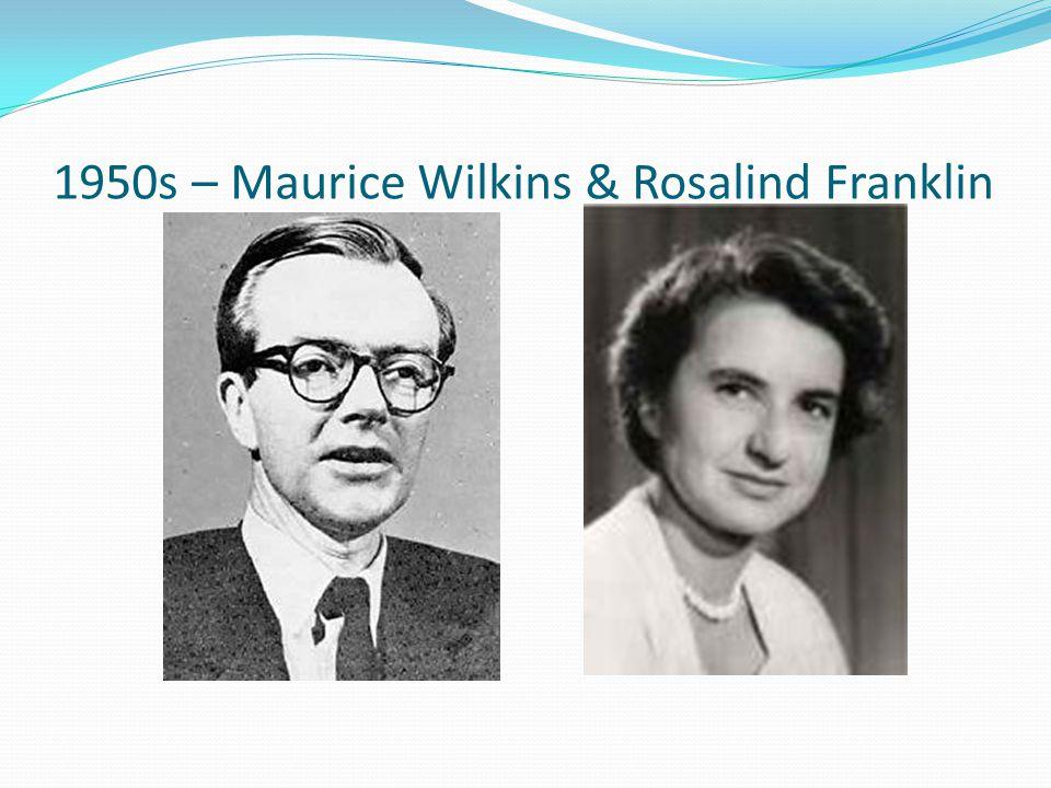 1950s – Maurice Wilkins & Rosalind Franklin