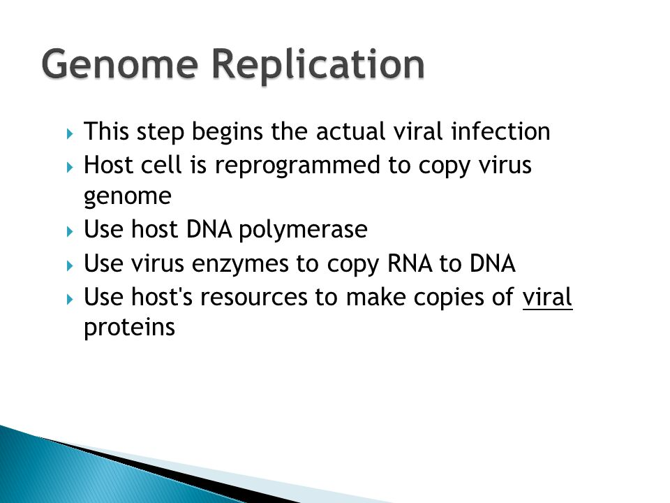  This step begins the actual viral infection  Host cell is reprogrammed to copy virus genome  Use host DNA polymerase  Use virus enzymes to copy RNA to DNA  Use host s resources to make copies of viral proteins