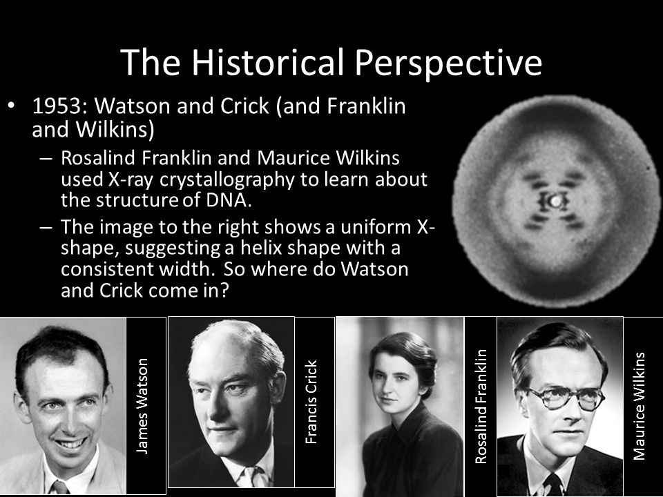 The Historical Perspective 1953: Watson and Crick (and Franklin and Wilkins) – Rosalind Franklin and Maurice Wilkins used X-ray crystallography to lea