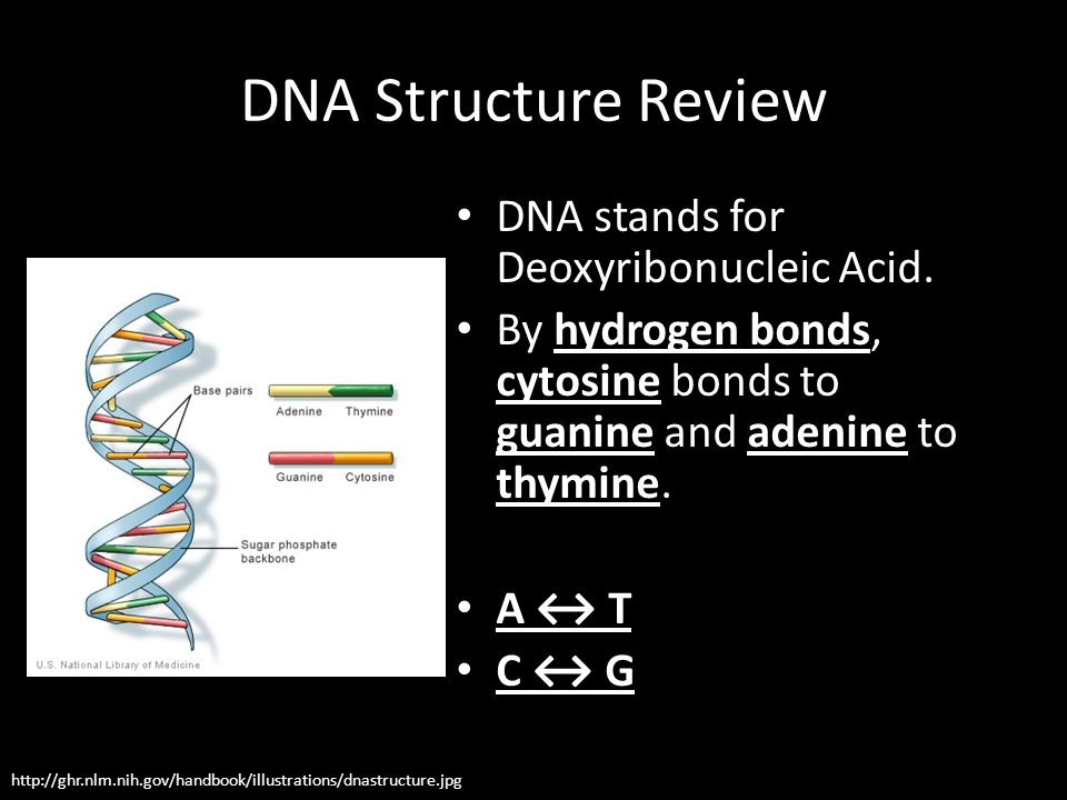DNA Structure Review DNA stands for Deoxyribonucleic Acid. By hydrogen bonds, cytosine bonds to guanine and adenine to thymine. A ↔ T C ↔ G http://ghr