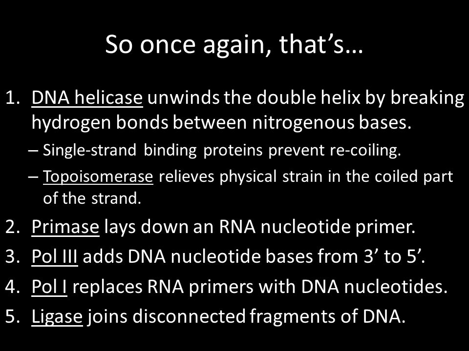 So once again, that's… 1.DNA helicase unwinds the double helix by breaking hydrogen bonds between nitrogenous bases. – Single-strand binding proteins