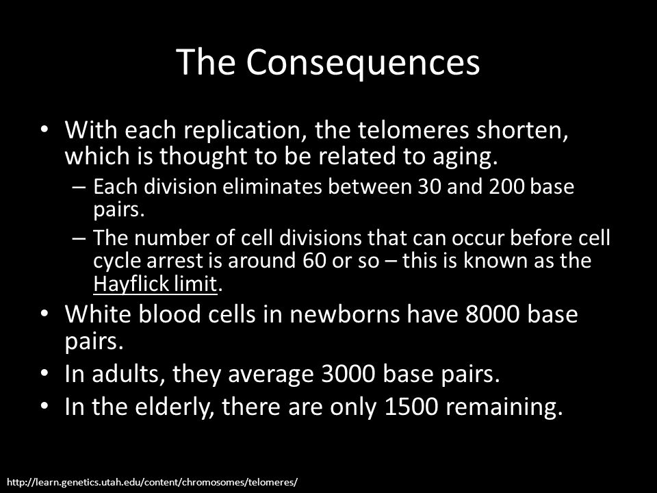 The Consequences With each replication, the telomeres shorten, which is thought to be related to aging. – Each division eliminates between 30 and 200