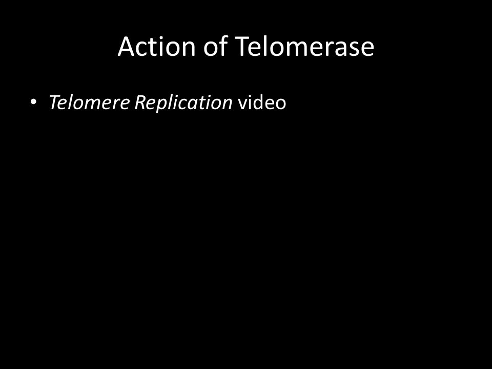 Action of Telomerase Telomere Replication video