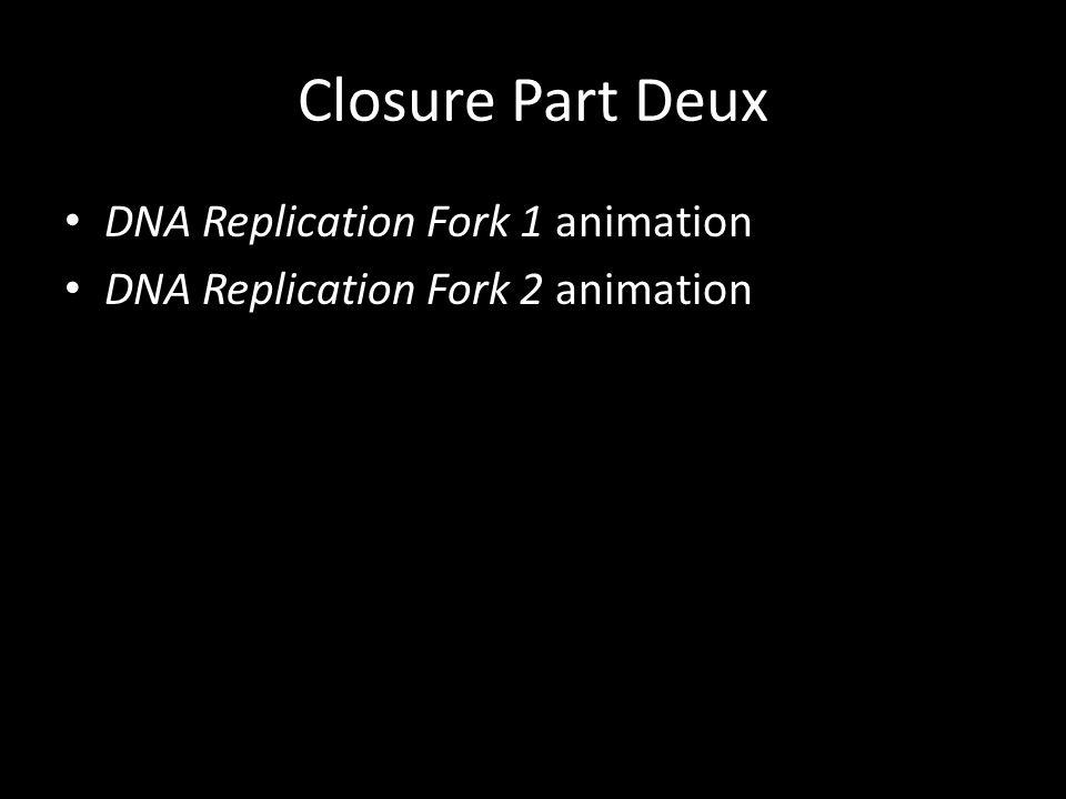 Closure Part Deux DNA Replication Fork 1 animation DNA Replication Fork 2 animation