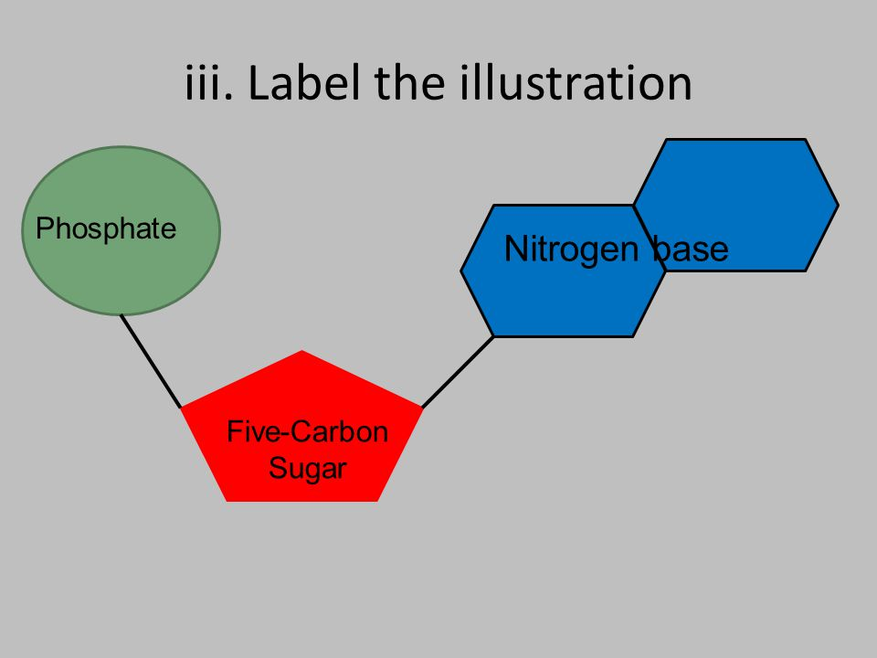 iii. Label the illustration Phosphate Five-Carbon Sugar Nitrogen base