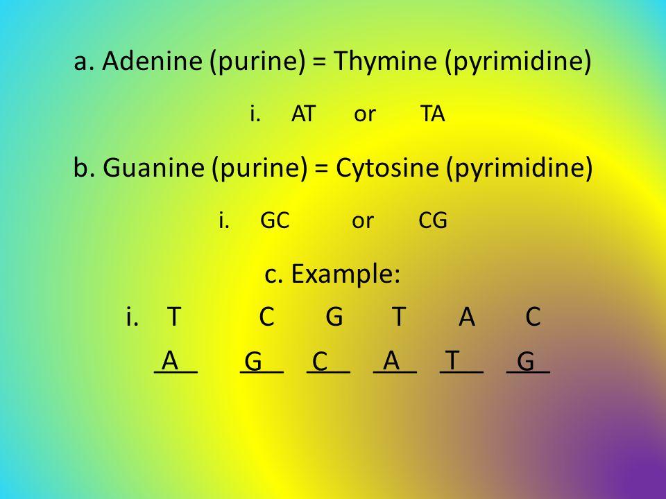 a. Adenine (purine) = Thymine (pyrimidine) i.ATor TA b.