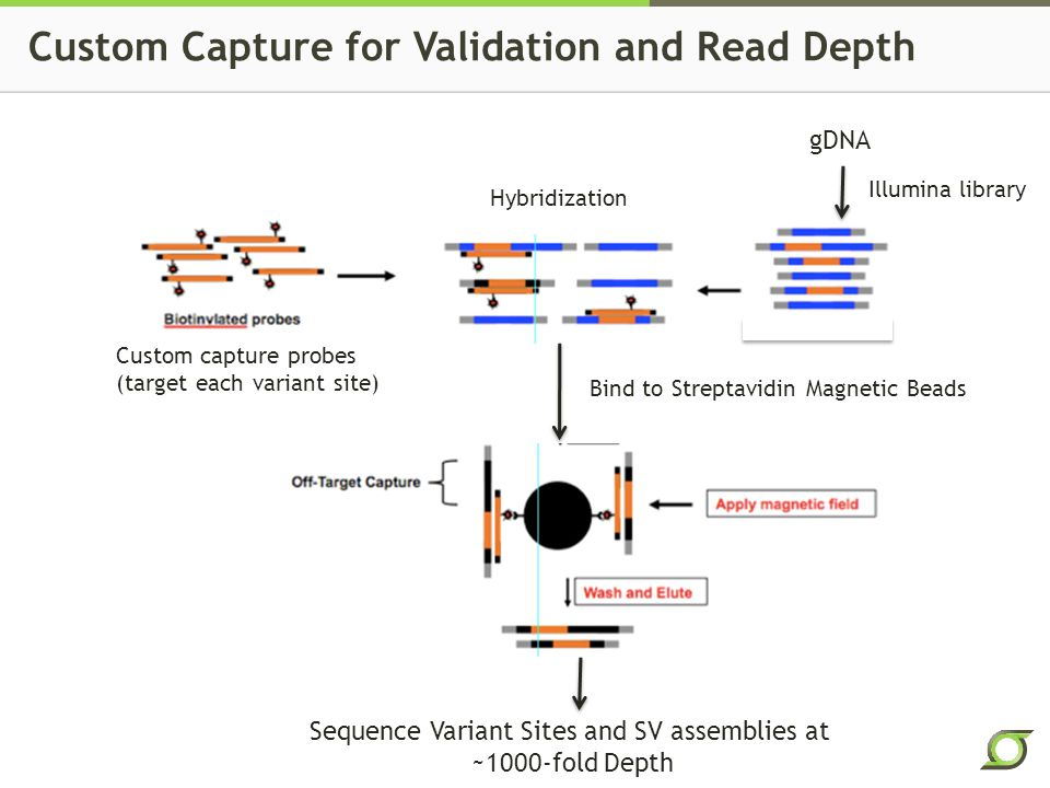 Custom Capture for Validation and Read Depth gDNA Illumina library Custom capture probes (target each variant site) Hybridization Bind to Streptavidin Magnetic Beads Sequence Variant Sites and SV assemblies at ~1000-fold Depth