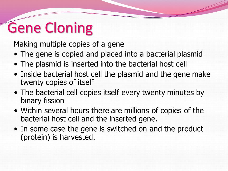 Gene Cloning Making multiple copies of a gene The gene is copied and placed into a bacterial plasmid The plasmid is inserted into the bacterial host cell Inside bacterial host cell the plasmid and the gene make twenty copies of itself The bacterial cell copies itself every twenty minutes by binary fission Within several hours there are millions of copies of the bacterial host cell and the inserted gene.