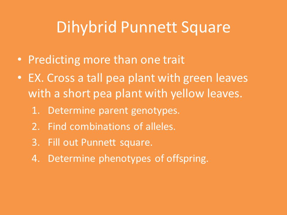 Dihybrid Punnett Square Predicting more than one trait EX.