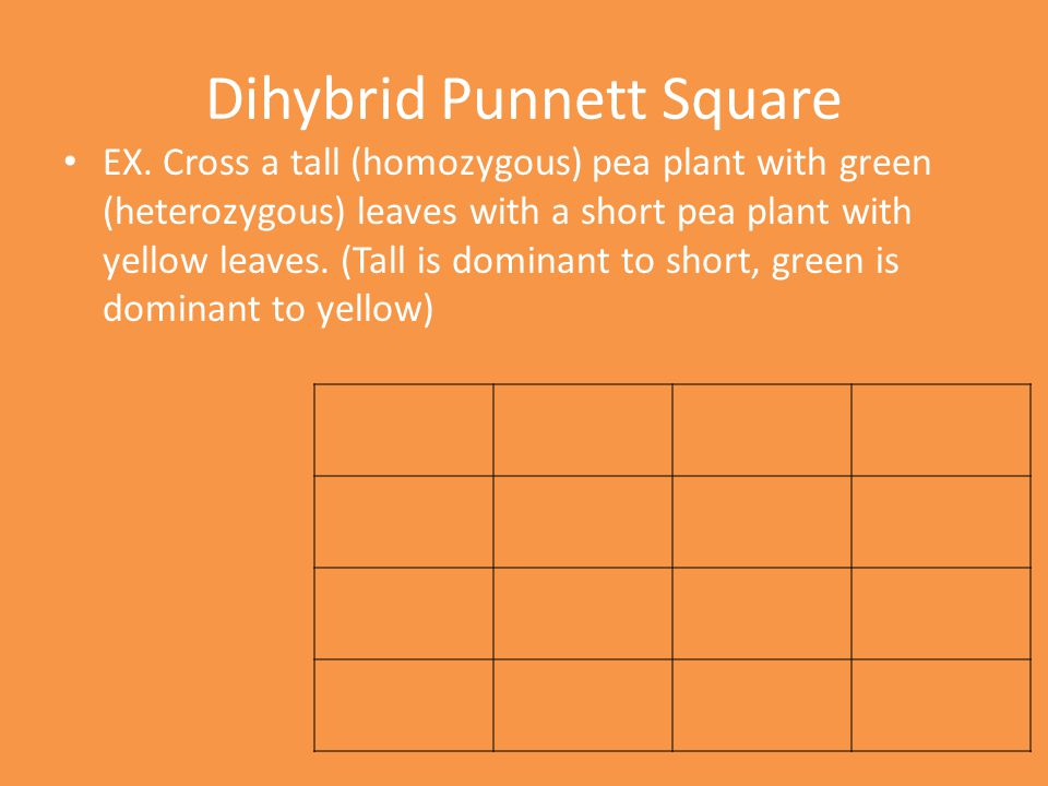 Dihybrid Punnett Square EX. Cross a tall (homozygous) pea plant with green (heterozygous) leaves with a short pea plant with yellow leaves. (Tall is d