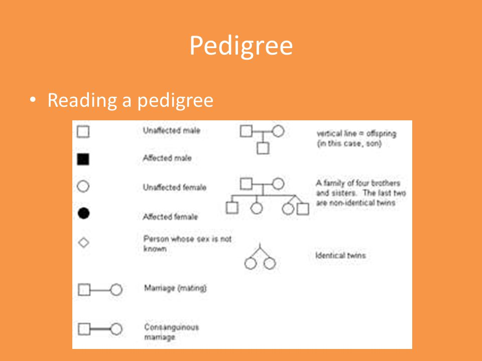 Reading a pedigree