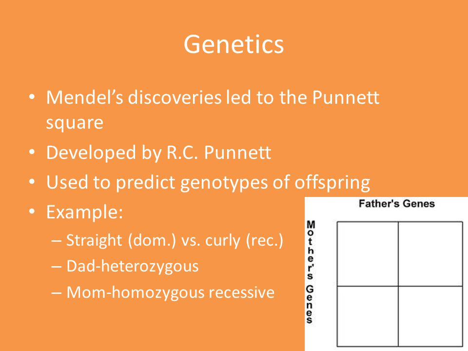 Genetics Mendel's discoveries led to the Punnett square Developed by R.C. Punnett Used to predict genotypes of offspring Example: – Straight (dom.) vs
