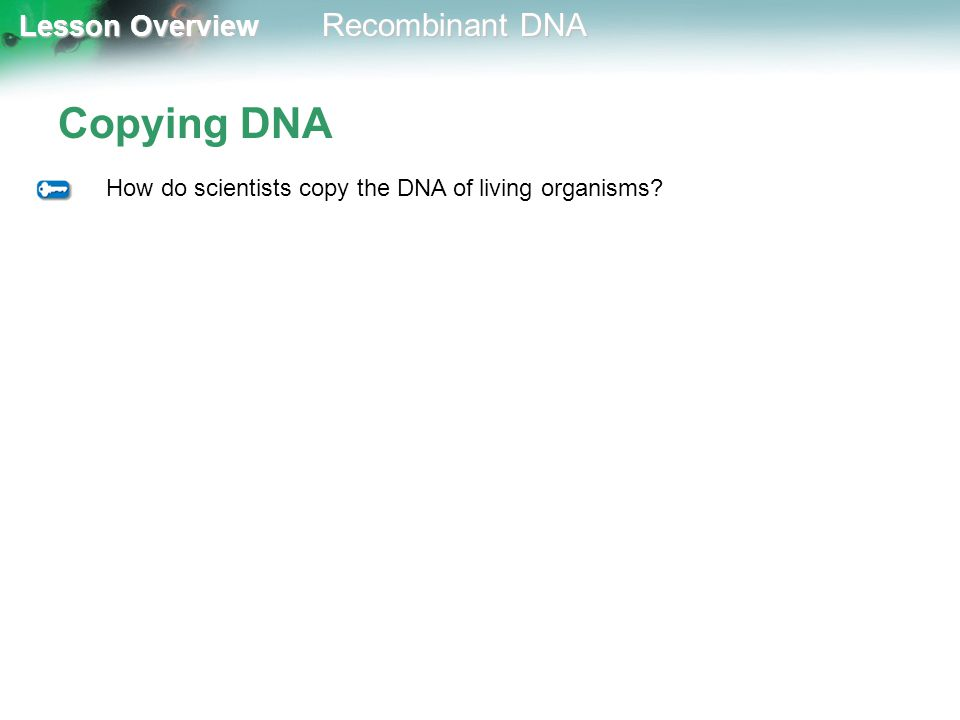 Lesson Overview Lesson Overview Recombinant DNA Copying DNA How do scientists copy the DNA of living organisms?