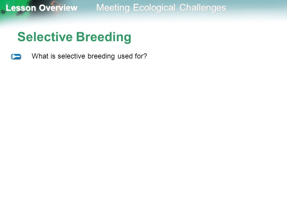 Lesson Overview Lesson Overview Meeting Ecological Challenges Selective Breeding What is selective breeding used for?