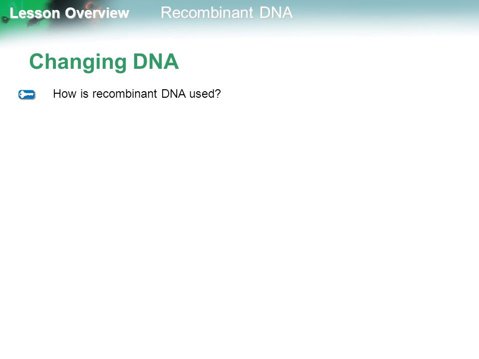 Lesson Overview Lesson Overview Recombinant DNA Changing DNA How is recombinant DNA used?